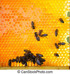 Busy bees producing honey - Close up view of the working...