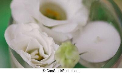White Rose in vase