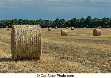 Field with haystacks - The sloping wheat field with...