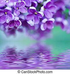 lilás, flores, fundo