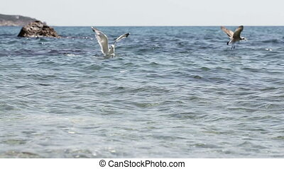 Seagull on sea water - Seagull takes bread floating on...