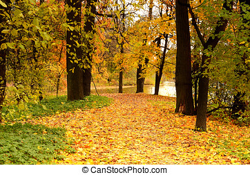 The autumn park - Colorful trees in the autumn park