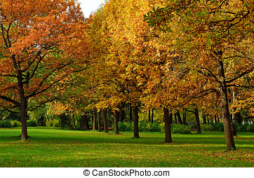Autumn colorful oak trees in the park
