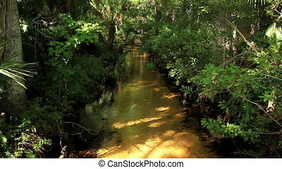 Natural River in Florida - River in Florida with native...