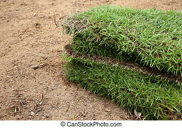 New grass, planting new sod grass in the garden