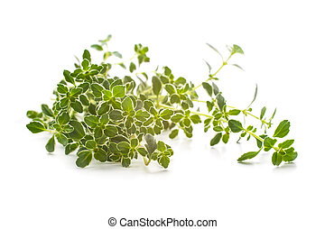 Thyme spice - Thyme branch isolated on white