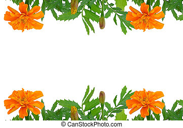 Bright Tagetes flowers frame with empty space