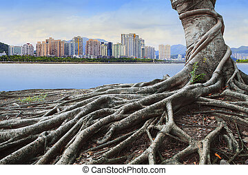 big root tree infront of city building concept forest and urban