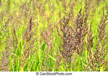 Stems of sedge in the field
