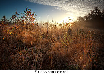 sunrise over marsh during misty autumn morning - gold...