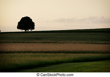 farmland with tree in background