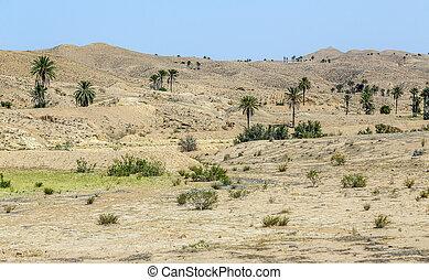 Monument of sheep, Sahara, Chebika, Tunisia