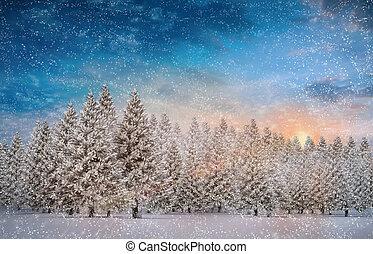 abete, nevoso, composito, immagine, albero, paesaggio