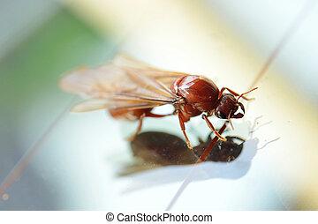 hormiga, poco, insecto, blanco, termita