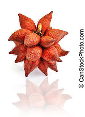 Red Salak on White Background