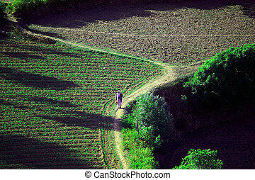 terraced fields - man walking from work on the fields