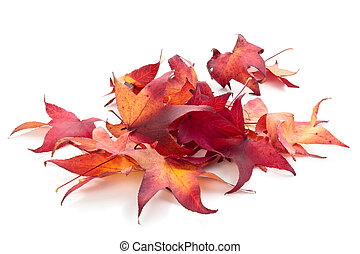 Colorful autumn leaves isolated on white background.
