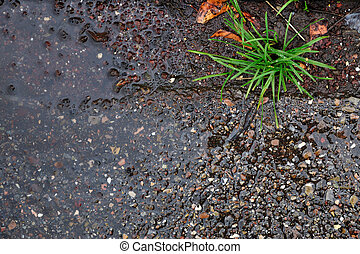 puddle - sidewalk after a raining day