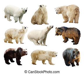 Set of bears. Isolated over white