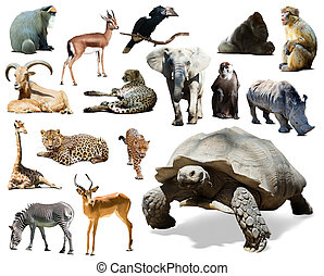 African animals Isolated over white background - African...
