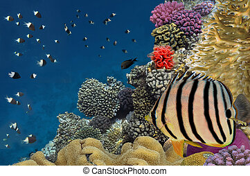 Coral reef with soft and hard corals with exotic fishes anthias