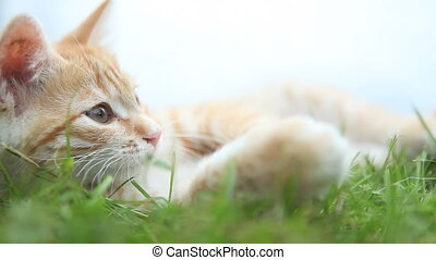 small red cat lying on green grass