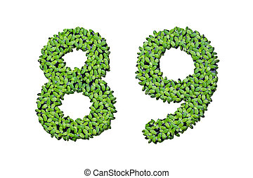 Duckweed alphabet letters - Number 8, 9 isolated on white...