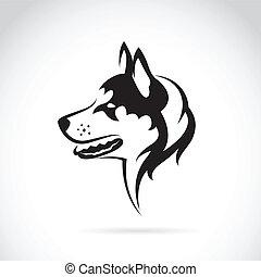 vektor, Bild, hund, sibirisch, heiser, weißes,...