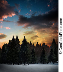 Fir tree forest in snowy landscape