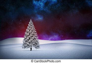Fir tree in snowy landscape