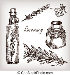 Kitchen herbs and spices. Rosemary oil set hand drawn...