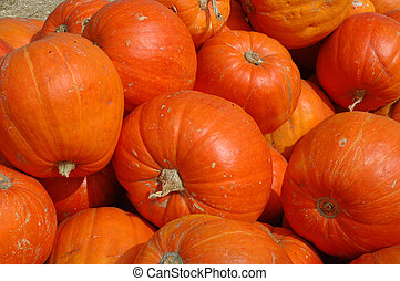 Orange Pumpkins - Orange pumpkins in a pile on a farm.