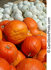 Orange and white pumpkins in a pile on a farm.