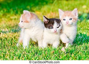 kittens on the grass - little bitty kittens on the green...
