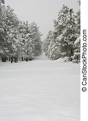 Snow Covered Tree Lined Path - Scenic view of a snow covered...