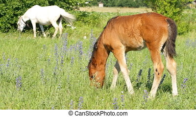 Beautiful foal pasture on a meadow