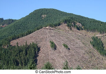 Clearcut Logging - clearcut hillside in Washington state
