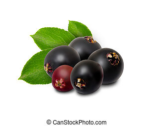 Elderberry isolated - Photo of elderberries isolated on...