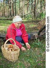 Woman collect mushrooms in forest in September