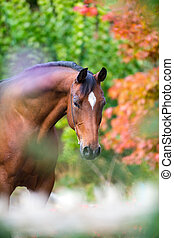 Brown horse portrait on flowers - Brown horse portrait on...