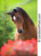 Häst, grön, huvud, bakgrund, vik