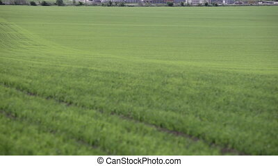 granaries near the green field in spring - granary and...