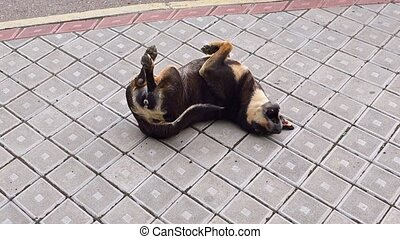 Dog Wallowing and Rolling over on the sidewalk