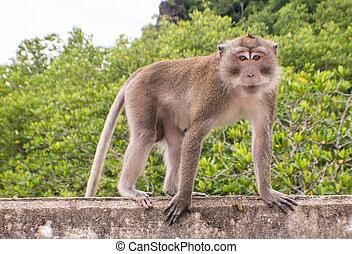monkey - Monkey on the bridge