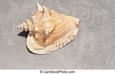 Shell on the sand - Shell laying on the sand on the sunny...