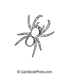 Tarantula - Vector illustration : Tarantula on a white...