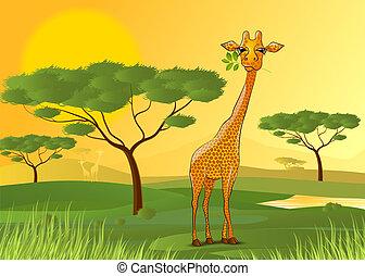 Giraffe eating leaves in Africa at sunset - vector...