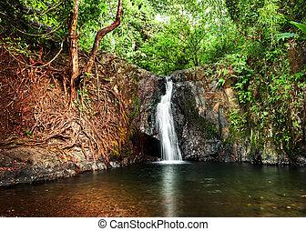 Tropical rain forest landscape with jungle plants