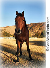 Curious Large Brown Colt Horse in HD