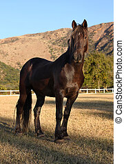Large Strong Brown Colt Horse - Portrait Picture of Large...